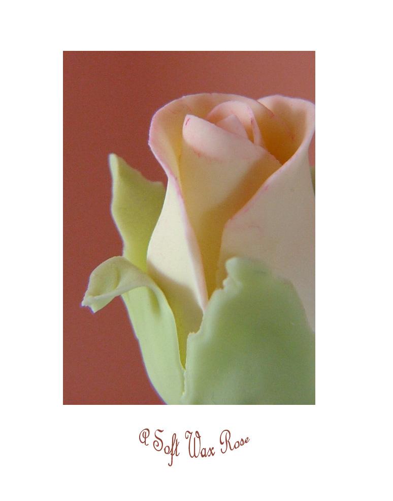 A Soft Wax Rose