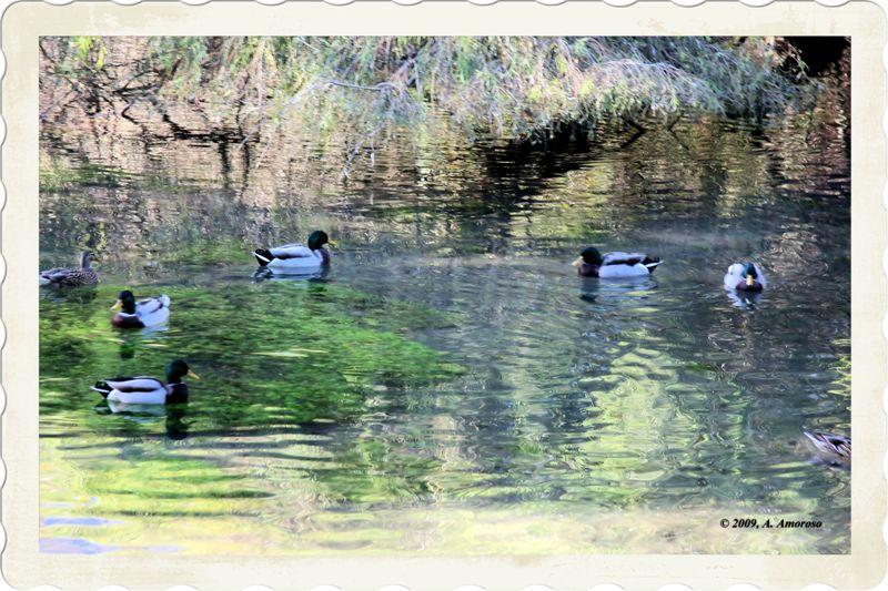 A spasso per lo stagno foto immagini animali animali for Vasca per stagno
