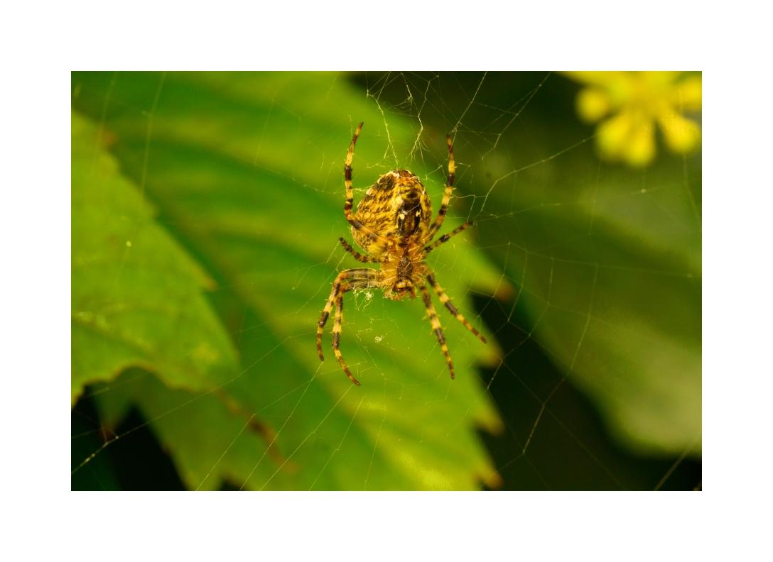 a spider ......