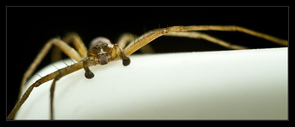 a spider's glimpse