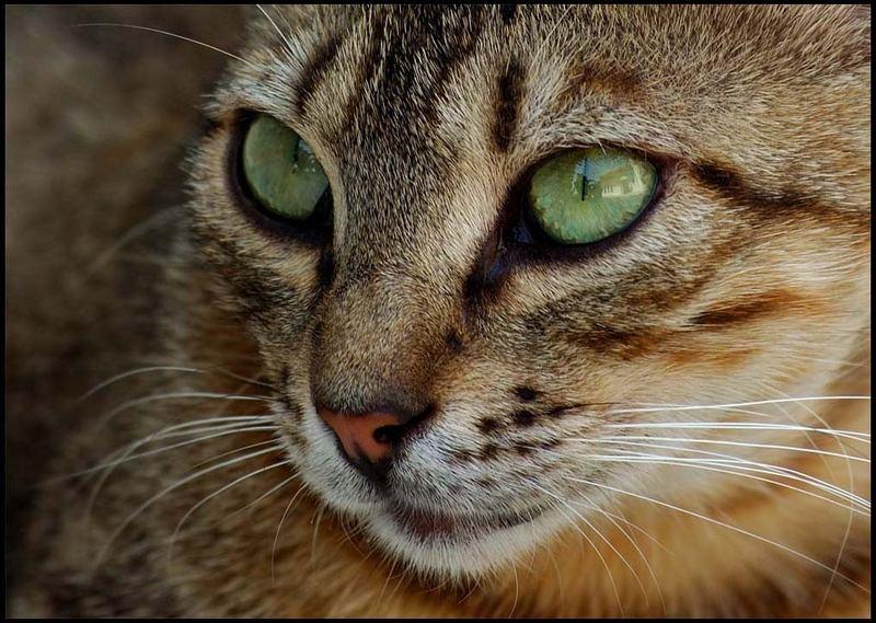 A Stray Cat.