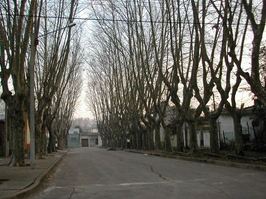 A street of Montevideo in Autumn