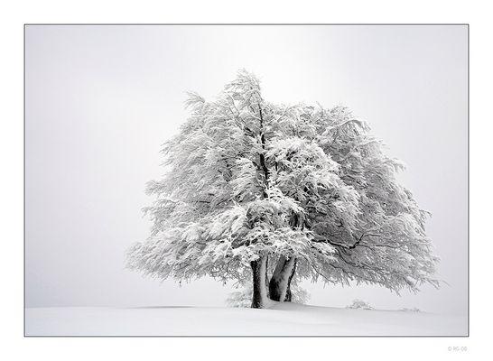 """""""A Taste of Winter"""""""