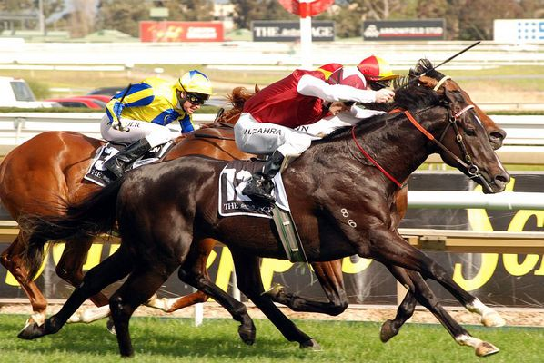 A Thoroughbred in full flight at the Caulfield races in Melbourne