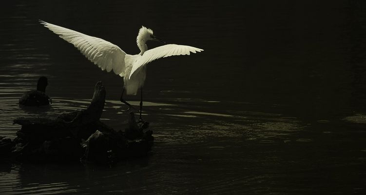 A tire d'ailes