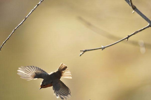 à tire d'ailes