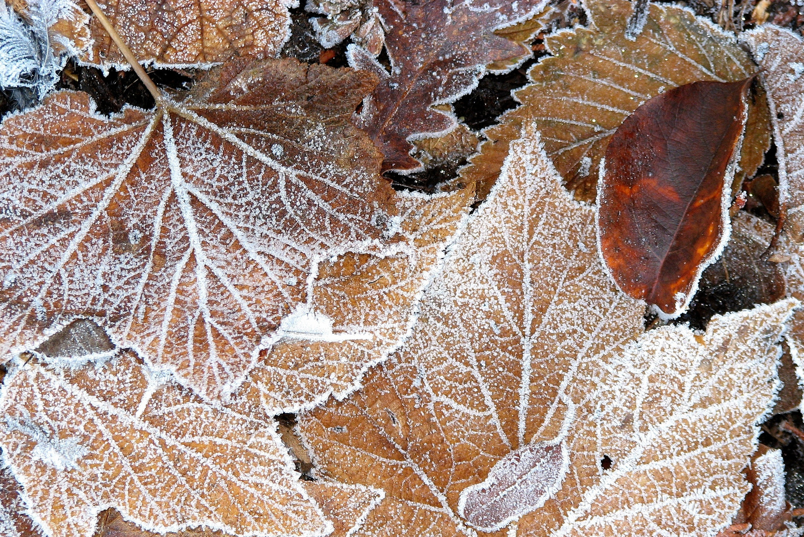 A Touch of Frost (3)