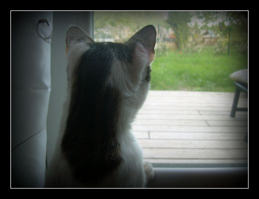 A travers la fenêtre