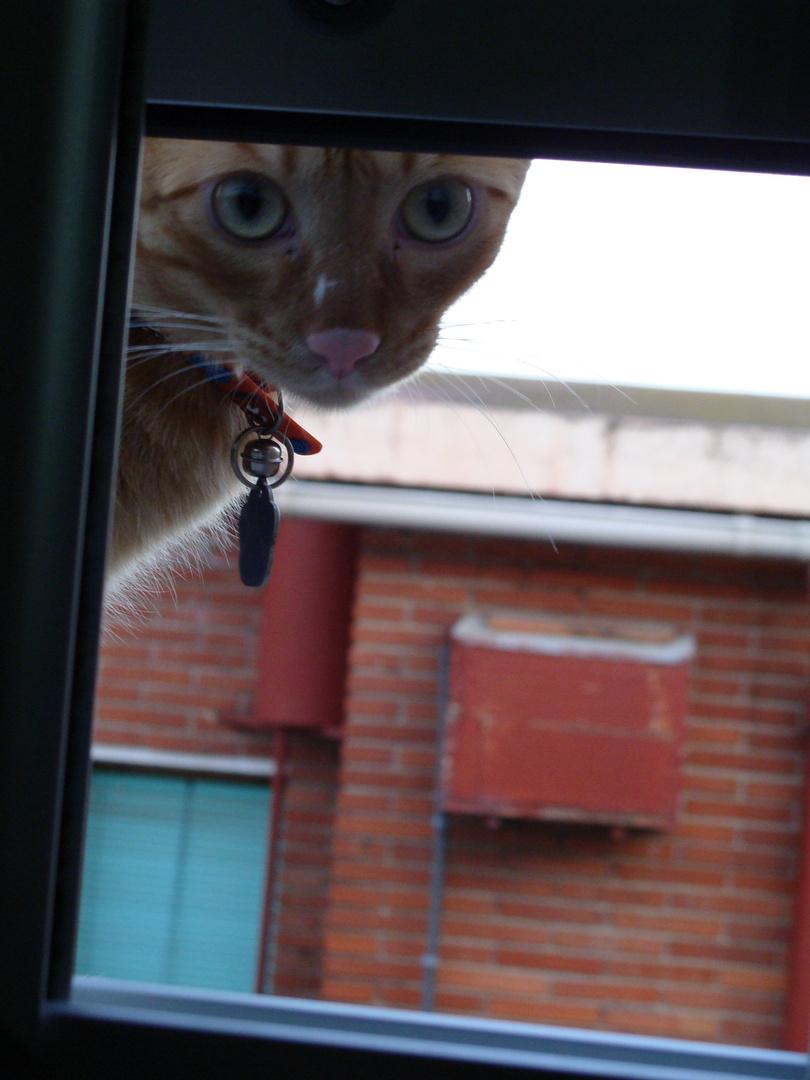 a traves de la ventana