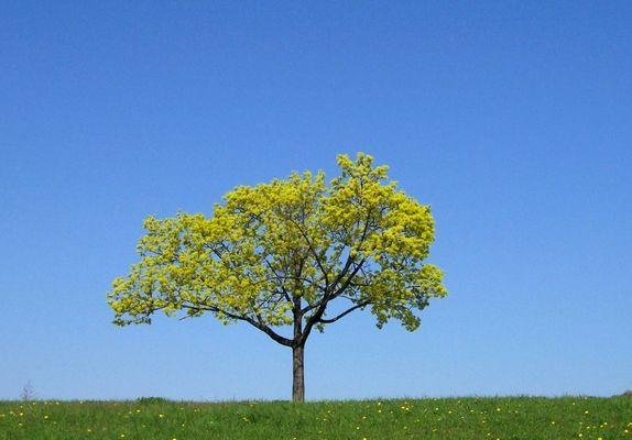 a tree near Danube