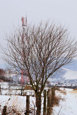 A tree sad?