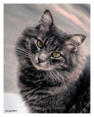 a tutte le mie Amiche-un bel Gattino