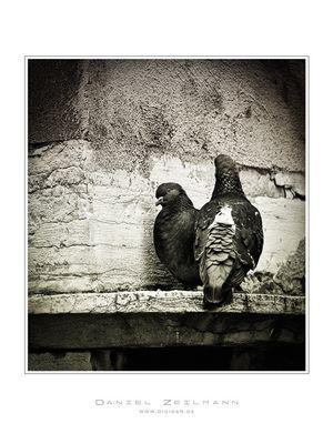 a venetian love story