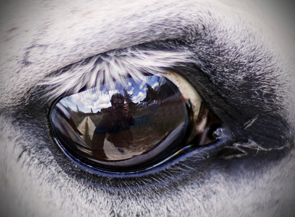 A vista de... caballo