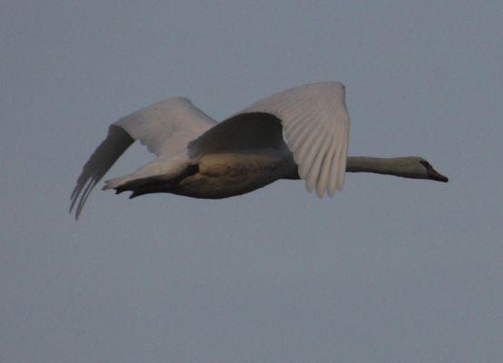 A vole d'oiseau