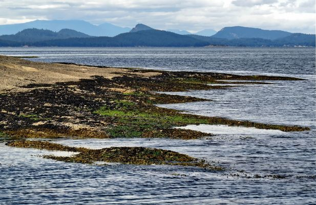 A Walk on the Island Shores (2)