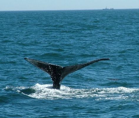 ' A Whale of a Tail '