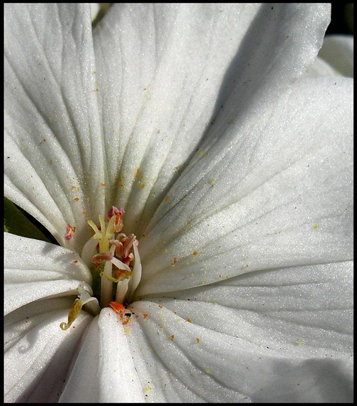 A White Flower 1