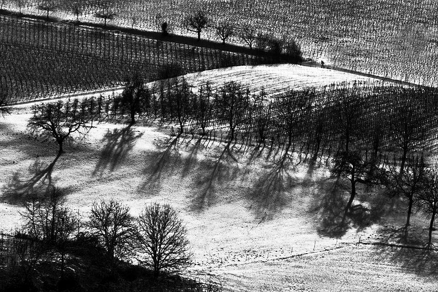 A winter's day in the vineyard