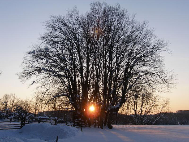 """""""A Winter`s Tale"""""""