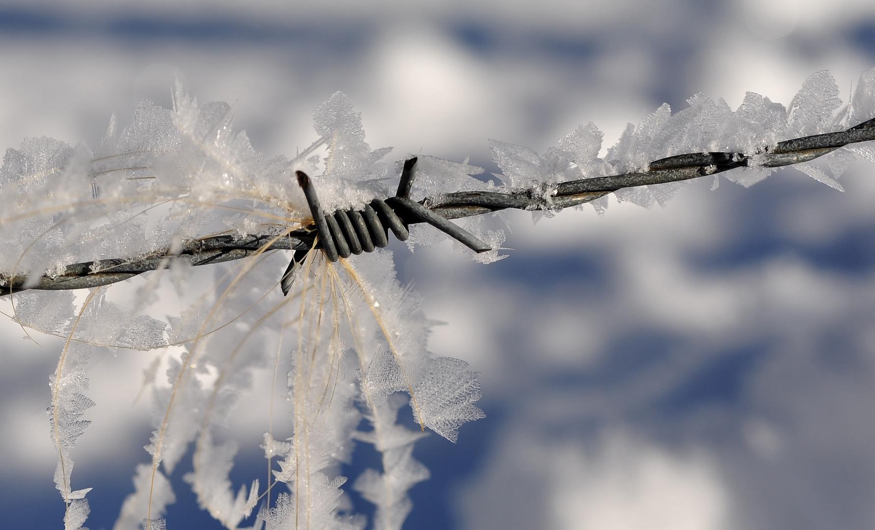 A winter`s tale