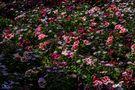 Blütenwiese... von TacitusRomeo