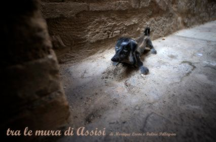 12. Tra le mura di Assisi