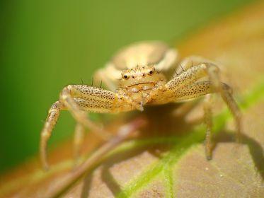 09 - Spinnen