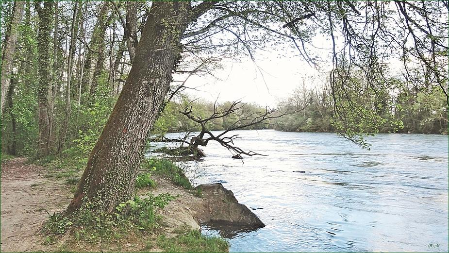 Aarelandschaft im Naturschutzgebiet der Elfenau . . . .