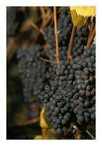 Aargauer Wein