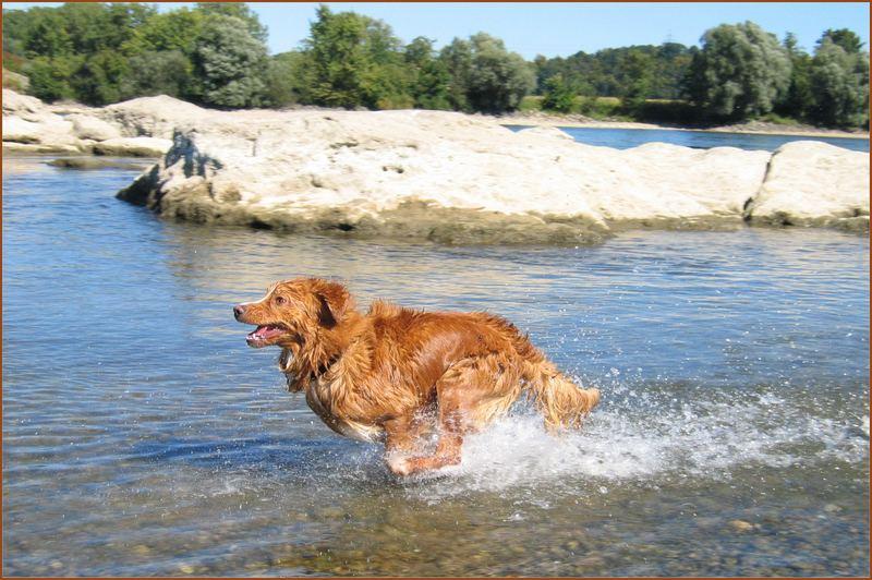 Aarlon liebt Wasser