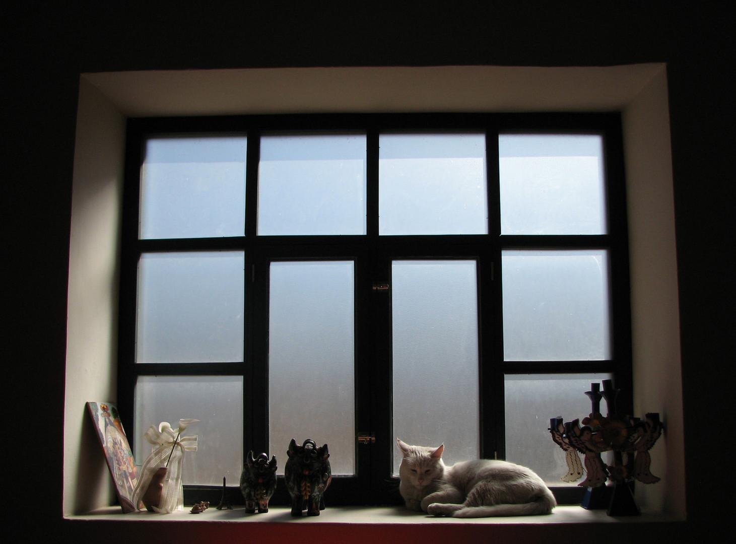Aaron en la ventana