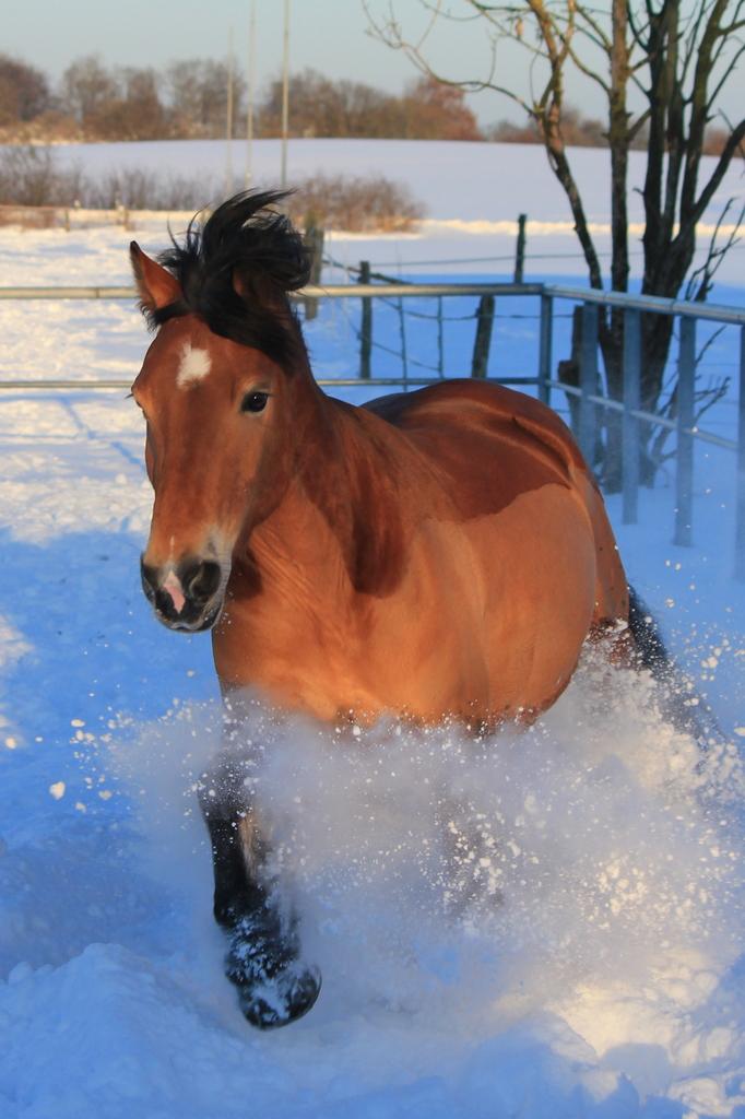Ab durch den Schnee