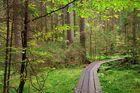 Ab in den Urwald ...