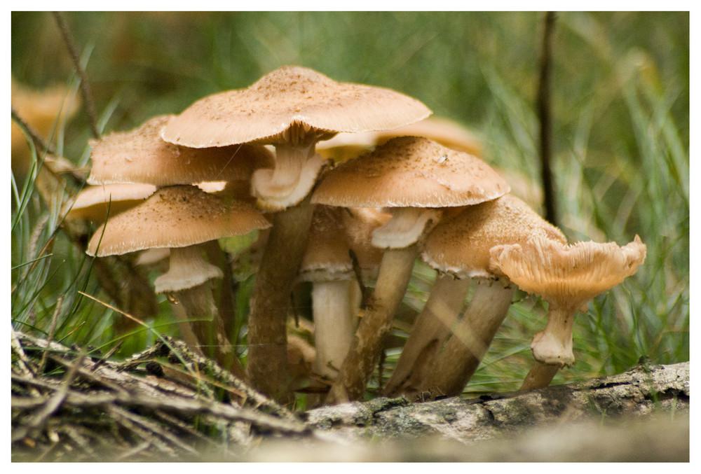 ab in die Pilze 3