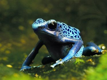 Amphibien & Reptilien