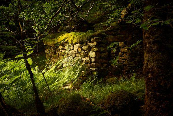 Abandoned Femine Cottage - ein Zeitzeuge