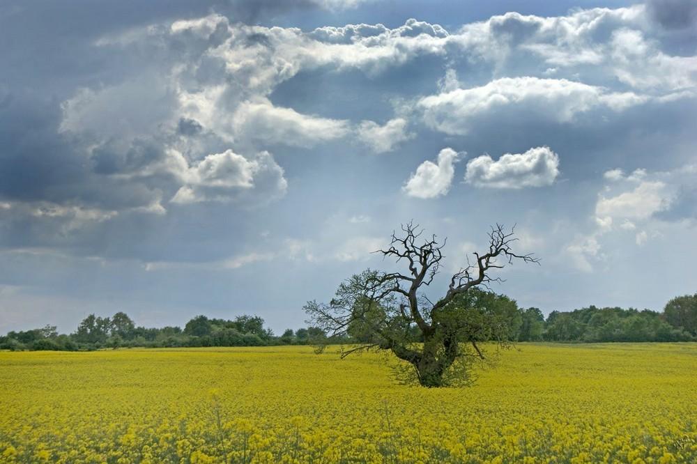 Abandonné sous un ciel menaçant ..........