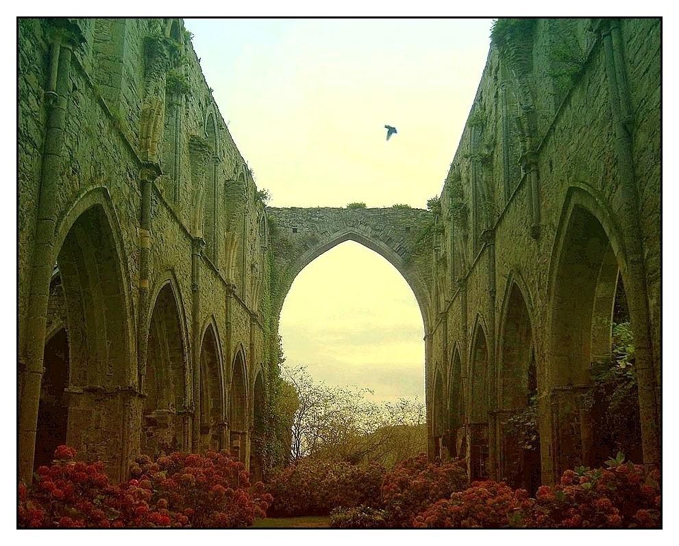 Abbaye de Beauport (22) Ruines de la nef