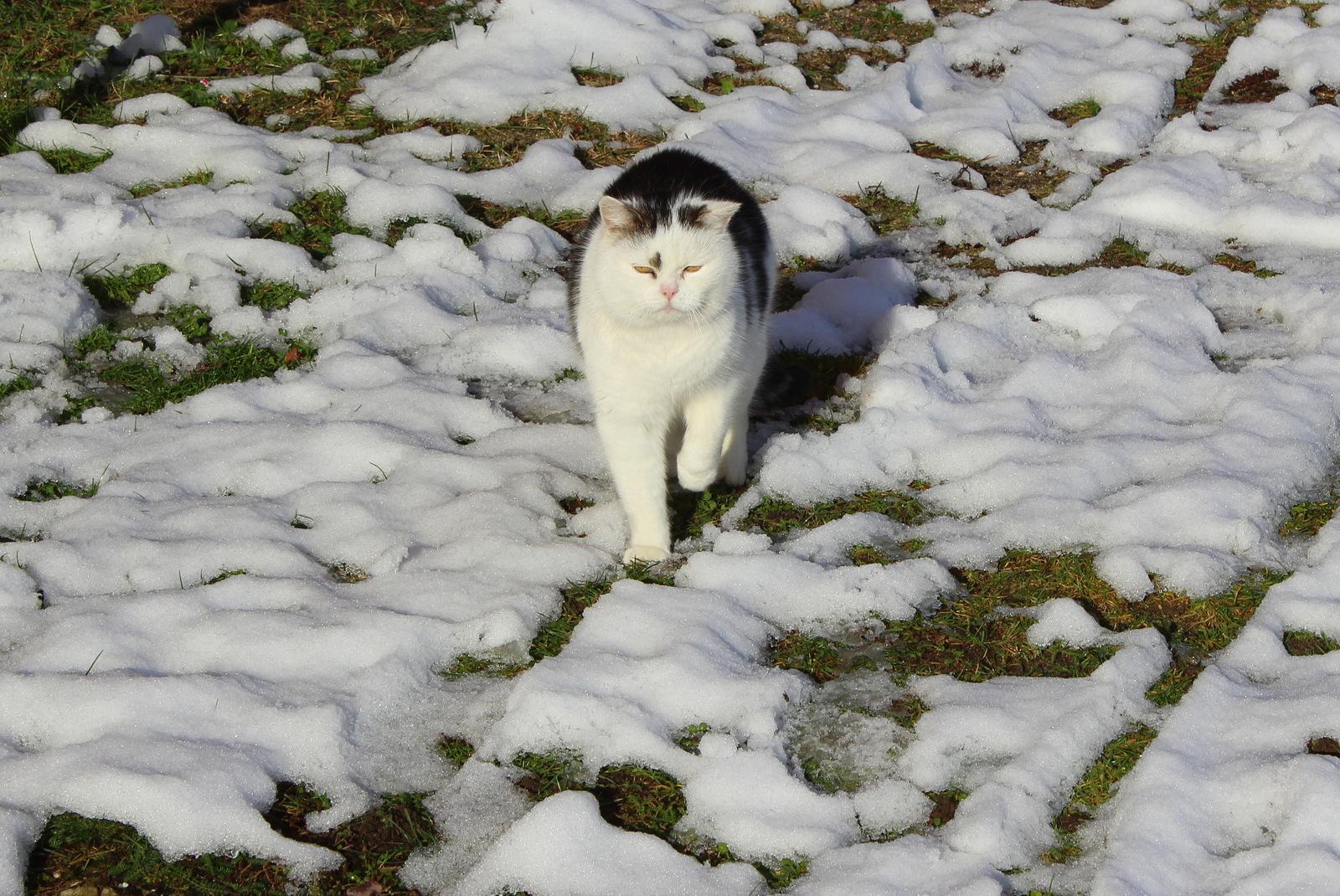 ABC- die Katze läuft im Schnee