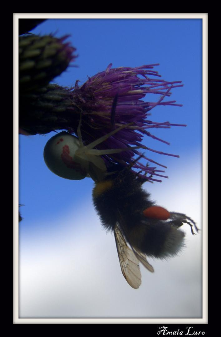 abeja vs araña
