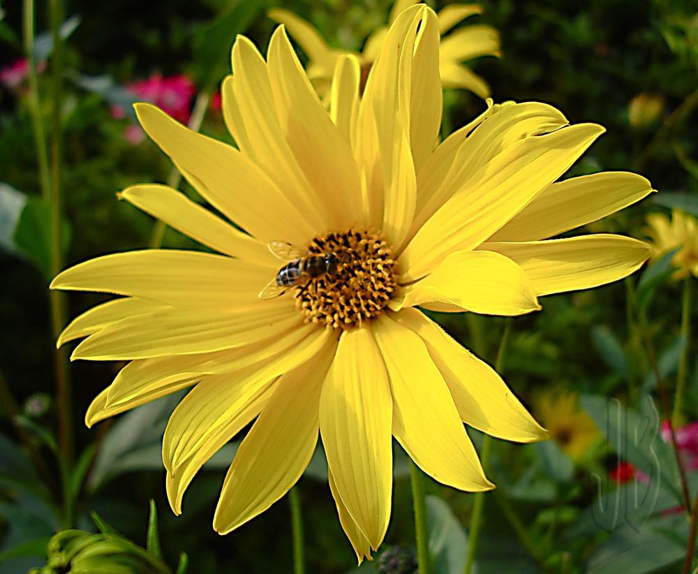 Abeja y flor, otonio