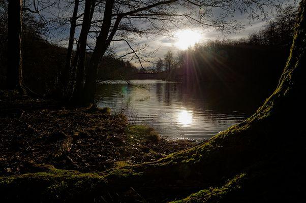 Abend am Waldweiher