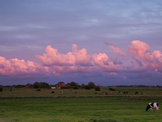 Abend auf der Weide