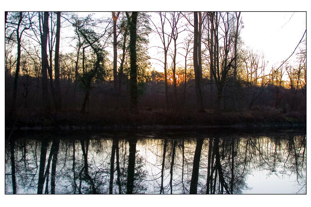 Abend im Rheinwald