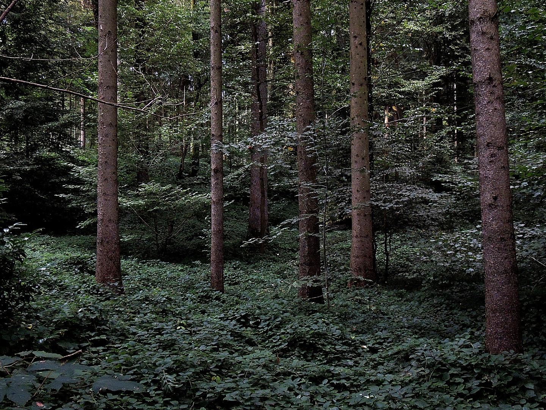 Abend im Wald II