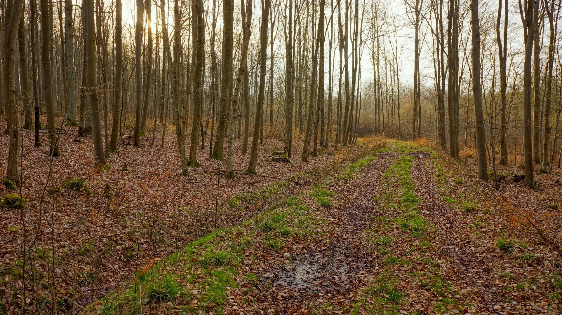 Abend im Wald (por la tarde en el bosque)