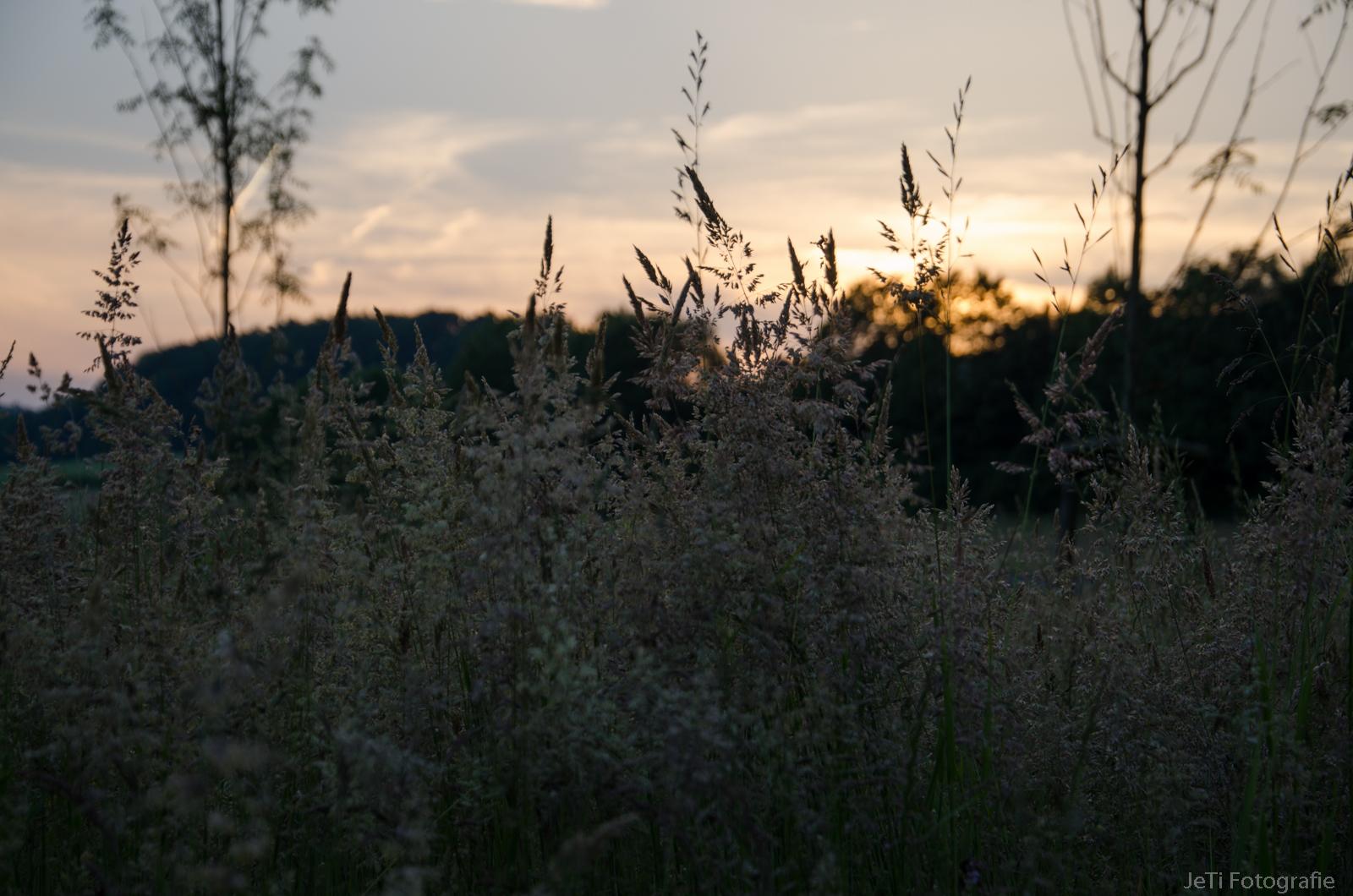 Abend Landschaft I