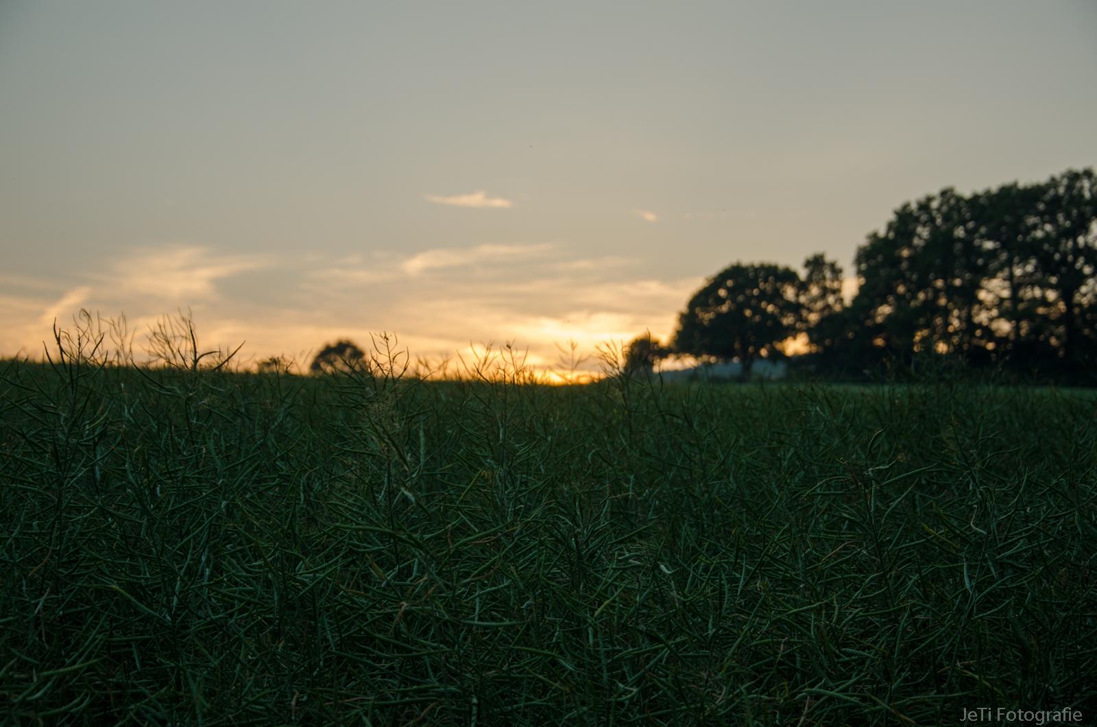 Abend Landschaft II