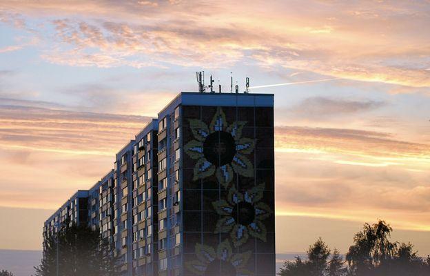 (Abend-)Sonnenblumen
